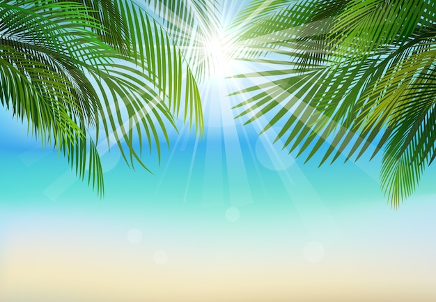 Palm leaf background on on beach and sunbeams background