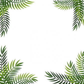 Palm leaf  background. summer frame with palm. offer banner