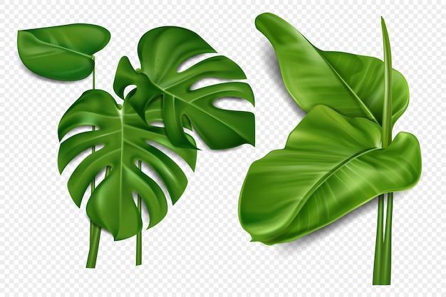 Пальмовые листья и пальмовые ветви на прозрачном фоне