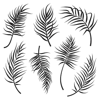 Palm leaves silhouettes set isolated