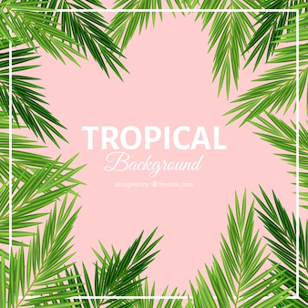 Palm leaves tropical background
