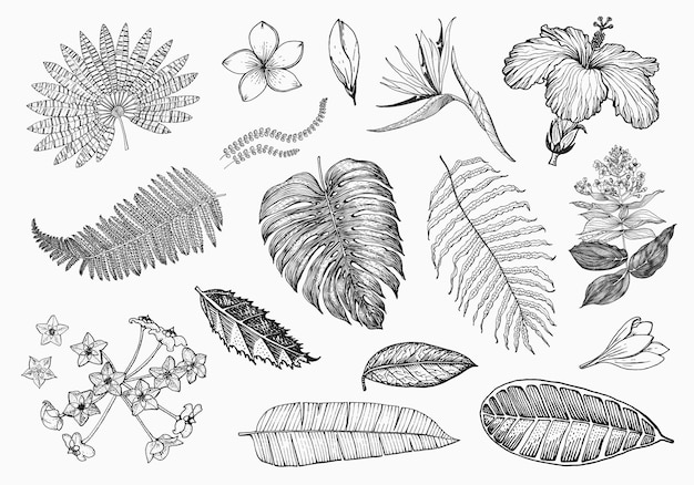 ヤシ植物ストレチアハイビスカスプルメリアメディニラモンステラ顕花植物熱帯またはエキゾチック