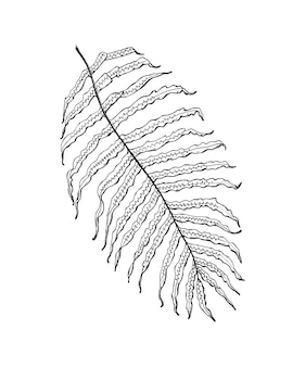 ヤシの植物熱帯またはエキゾチックな葉と葉ヴィンテージシダ刻まれた花手描きの植物