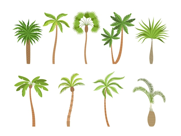 Palm tree. brazil hawaii exotic plants with coconut cartoon illustrations.