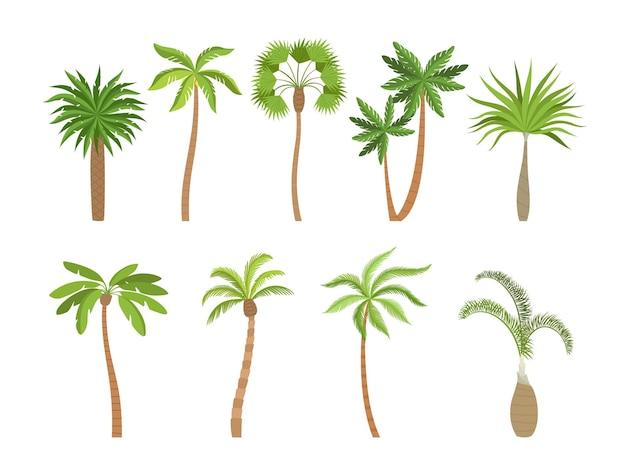 Пальма. бразилия, гавайи, экзотические растения с кокосовыми карикатурами.