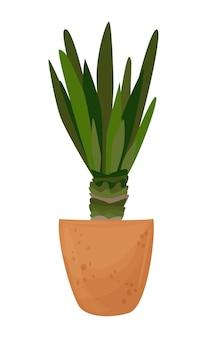 あなたのデザインのための白い背景の素晴らしい植物に分離されたポット観賞用の家の植物のヤシの木
