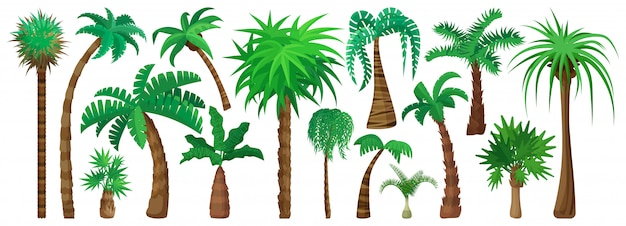 Palm tree isolated cartoon set icon.