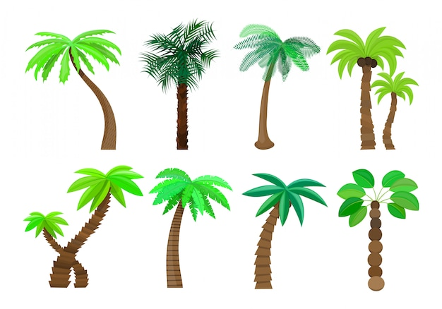 Palm tree isolated in cartoon style set on a white   illustration
