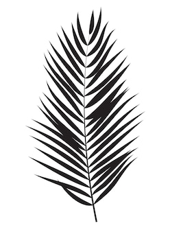 Силуэт листьев пальмы, изолированные на белом фоне
