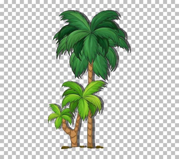 Пальма на прозрачном фоне