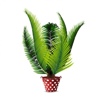 Palm tree in pot isolated