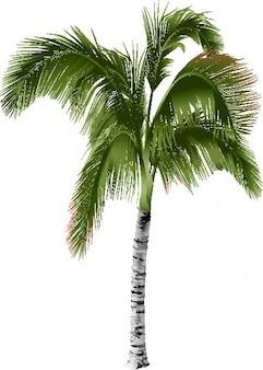 Palm tree side