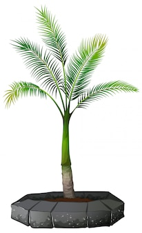 A palm tree on white