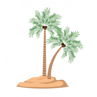 Palm tree with coconut in white