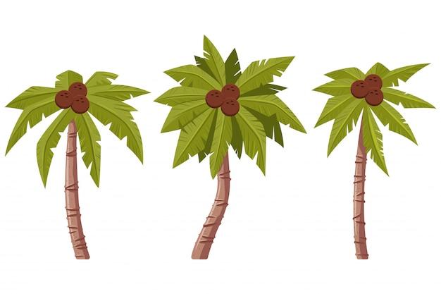 야자수 잎과 코코넛 만화 세트 흰색 배경에 고립.