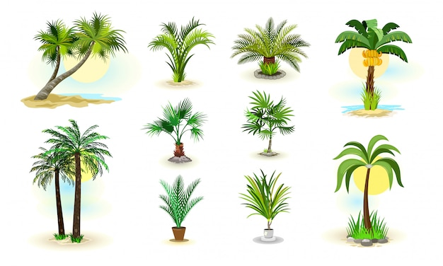 Palm trees icons