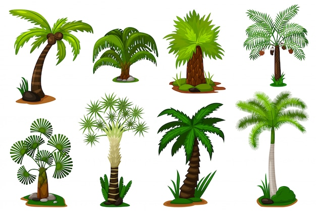 Palm trees set.  coconut palm tree plant