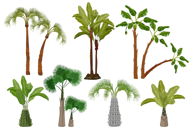 Palm trees. tropical plants collection garden of brazil or california vector cartoon pictures. summer exotic palm tree, green nature tropical illustration