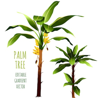 Palm trees. vector illustration