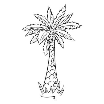 Пальма. тропическое дерево. экзотическая флора. мультяшный стиль. иллюстрация для дизайна и декора.