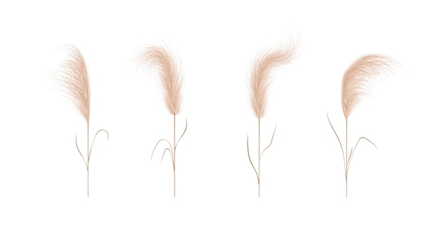 Pampas grass collection. floral ornament elements in boho style.