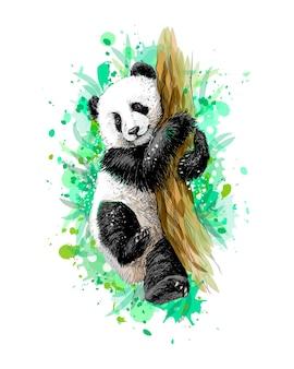 水彩のスプラッシュから木に座っているパンダの赤ちゃんカブ、手描きのスケッチ。塗料のイラスト