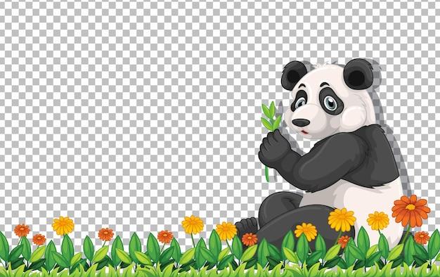 透明な背景の上の緑の草の上に座っているパンダクマ