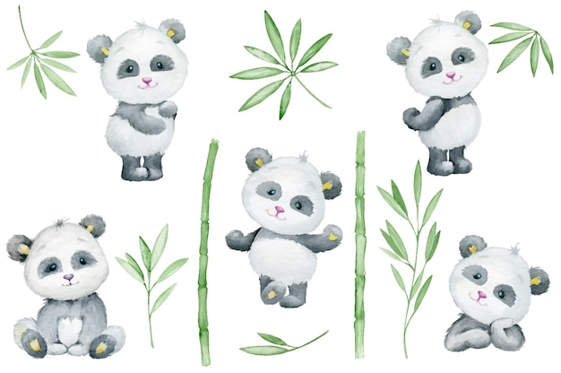 Panda, cute, animal, bamboo, leaves, and branches. watercolor, set.