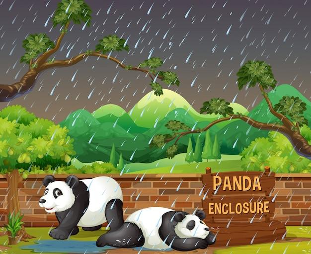 雨の夜、動物園のパンダ