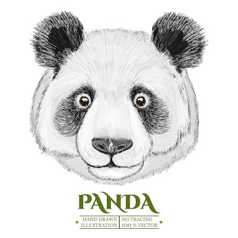 Panda portrait, hand drawn vectorized illustration