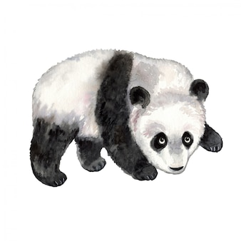 Panda watercolor animal