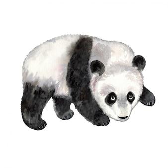Панда акварельное животное