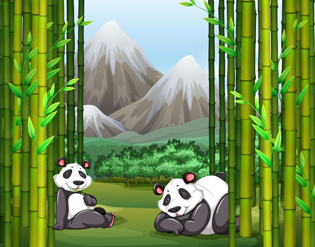 Панды и бамбуковый лес