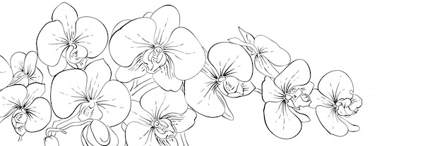 Panoramic ink orchids flowers banner. line black and white illustration