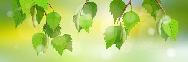 Панорамный весенний вид на березовые ветки