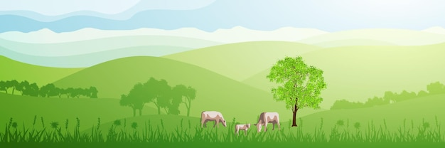 晴れた朝の緑の丘のパノラマビュー、牛は牧草地で放牧します