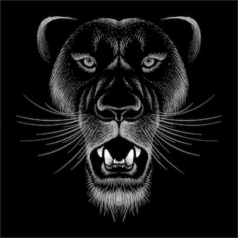 Panther with black background.
