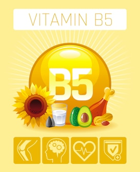 Pantothenic acid vitamin b5 rich food icons with human benefit. healthy eating flat icon set. diet infographic chart poster with avocado,chicken,milk,nuts.