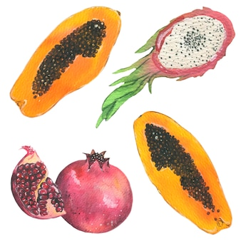 Papaia, dragon fruit and pomegranate. watercolor fruits illustration. vector isolated elements.