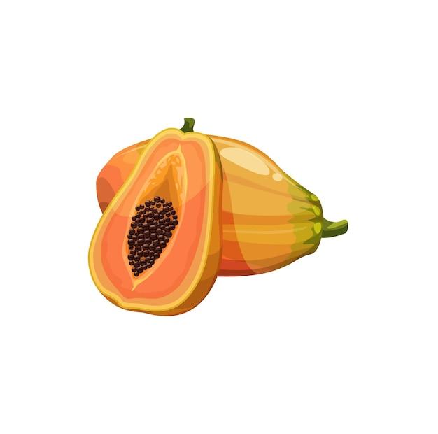 ジューシーな黄色の果肉ベクター植物とパパイヤ果実
