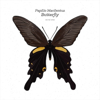 Papilio macilentus, the long tail spangle, is a species of butterfly