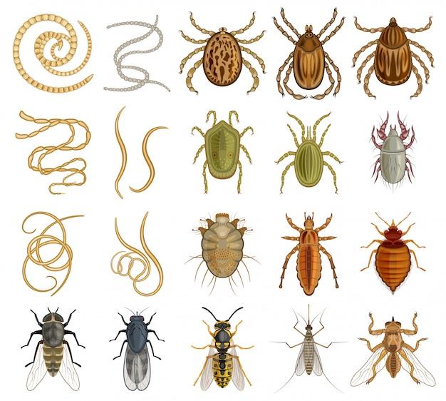 寄生虫漫画は、アイコンを設定します。白い背景の上の図の昆虫。孤立した漫画は、アイコンの寄生虫を設定します。