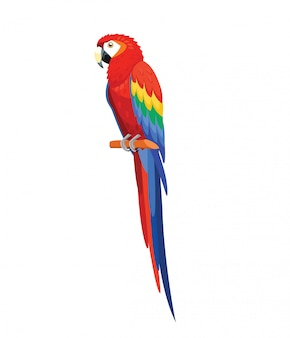 Parrot bird isolated on white
