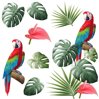 Parrot and tropical leave isolated