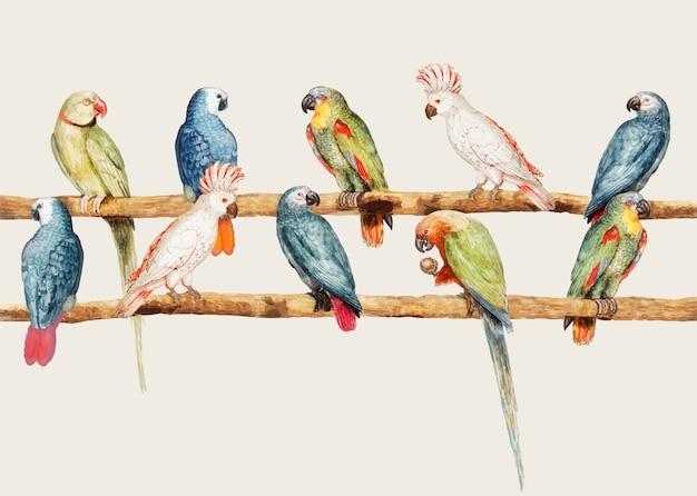 빈티지 스타일의 다양한 앵무새
