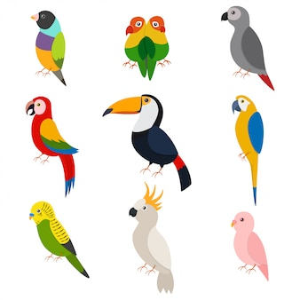 Parrots cartoon set isolated white
