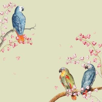 Parrots mockup border