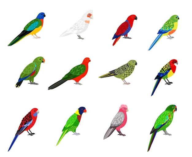 オウムセット。カラフルな羽を持つ漫画の鳥、くちばしと羽を持つ動物園の熱帯のキャラクター、白い背景で隔離の色のインコのベクトルイラスト