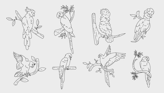 Parrots set outline design
