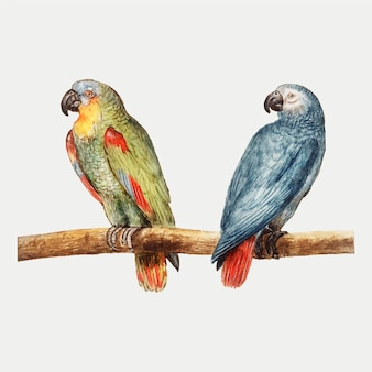 Parrots in vintage style